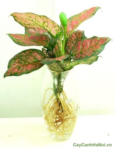 cac-loai-cay-trong-trong-nha-theo-phong-thuy-01-500x375 Các loại cây trồng trong nhà theo phong thủy