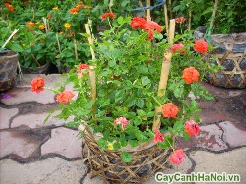 cach-cham-soc-cay-xanh-mua-he-01-500x375 Cách chăm sóc cây xanh mùa hè đúng cách