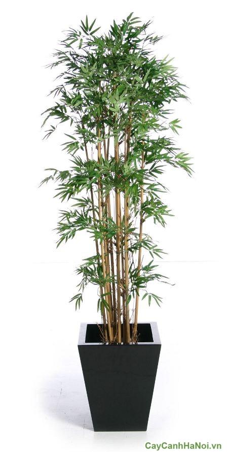 cach-trong-cay-canh-trong-nha-04-1-500x500 cách trồng cây cảnh trong nhà
