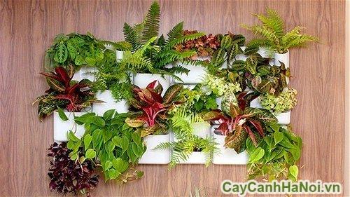 cach-trong-cay-canh-trong-nha-02-500x281 cách trồng cây cảnh trong nhà