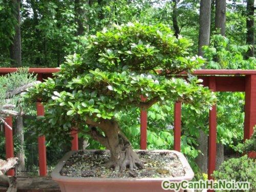 cay-canh-cho-menh-tho-03-500x391 cây cảnh cho mệnh thổ