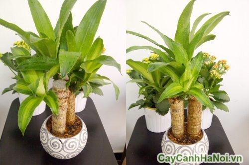 cay-canh-cho-menh-thuy-02-500x332 cây cảnh cho mệnh thủy