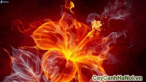cay-canh-cho-nguoi-menh-hoa-03-500x281 Cây cảnh cho người mệnh hỏa