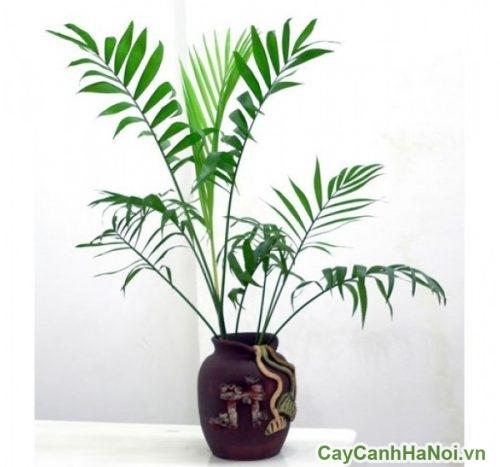 cay-canh-cho-nguoi-menh-moc-01-500x500 Cây cảnh cho người mệnh mộc