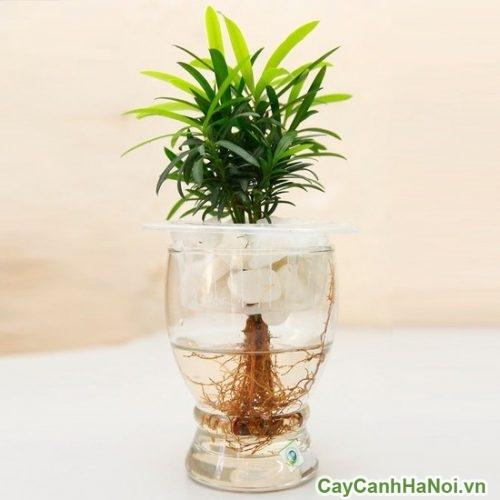 cay-cho-nguoi-menh-thuy-01-500x263 Cây cho người mệnh thủy