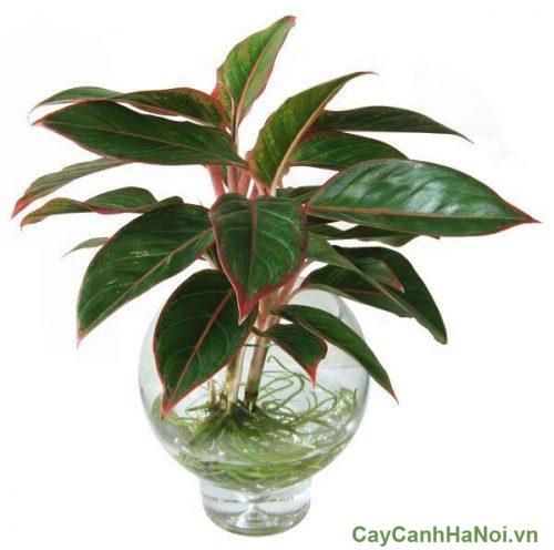 cay-phong-thuy-cho-nguoi-mang-hoa-01-500x375 cây phong thủy cho người mạng hỏa