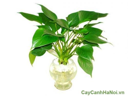 cay-phong-thuy-cho-nguoi-mang-thuy-01-500x375 cây phong thủy cho người mạng thủy