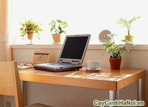 cay-phong-thuy-trong-phong-lam-viec-04-325x500 Cây phong thủy trong phòng làm việc