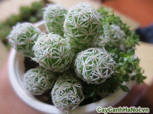 cay-trong-trong-nha-tot-cho-suc-khoe-03-500x375 Cây trồng trong nhà tốt cho sức khỏe