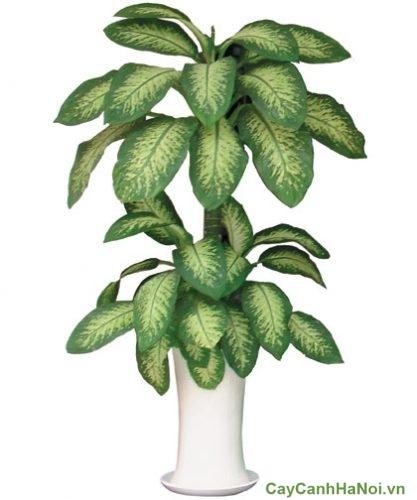 cay-trong-trong-van-phong-01-309x500 cây trồng trong văn phòng