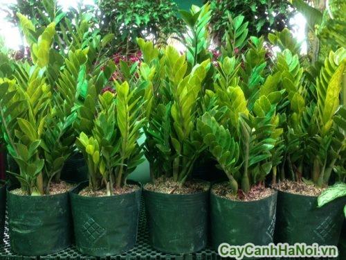 cay-xanh-cho-nguoi-menh-moc-03-392x500 Cây xanh cho người mệnh mộc