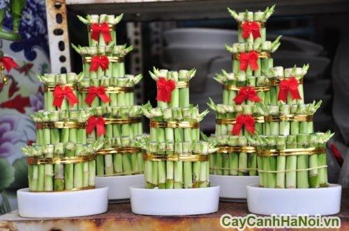 cay-xanh-cho-nguoi-menh-thuy-01-500x332 Cây xanh cho người mệnh thủy