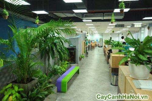 cay-xanh-trong-văn-phong-01-500x375 Cây xanh trong văn phòng kinh nghiệm bày trí