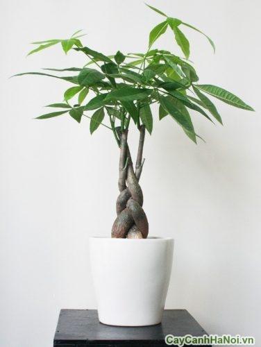 chau-cay-de-ban-lam-viec-01-432x500 Chậu cây để bàn làm việc