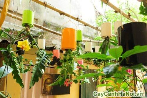 chau-cay-treo-nguoc-04-500x332 Chậu cây treo ngược trồng cây hoa cảnh