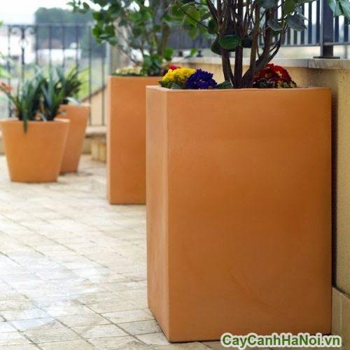 chau-nhua-trong-cay-canh-trong-nha-5-500x500 Chậu nhựa trồng cây cảnh trong nhà