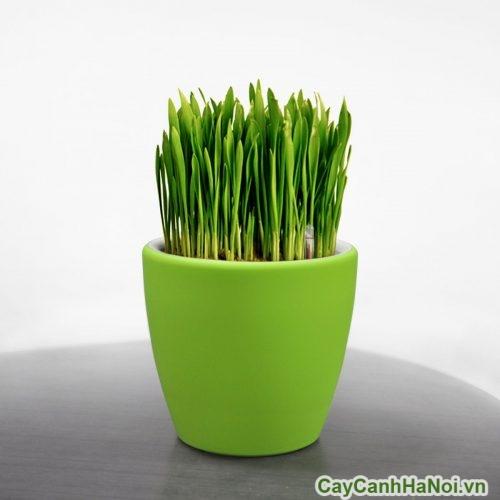 chau-trong-cay-trong-nha-05-500x500 Chậu trồng Cây Cảnh trong nhà