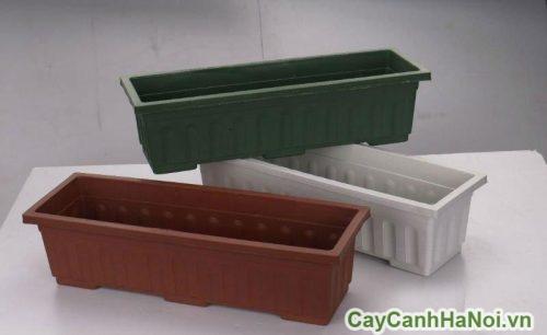 khay-nhua-trong-cay-canh-phong-thuy-3-500x331 Khay nhựa trồng cây cảnh Phong thuỷ