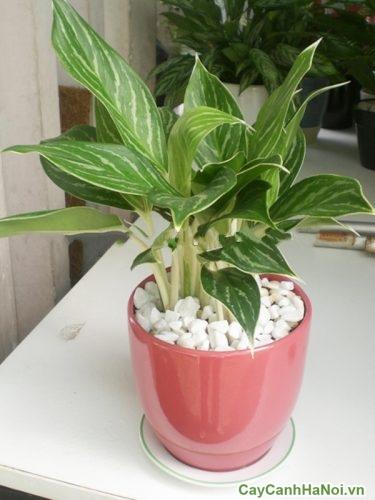 luu-y-khi-bay-tri-cay-xanh-1-500x375 Lưu ý khi bày trí cây xanh ở bàn làm việc
