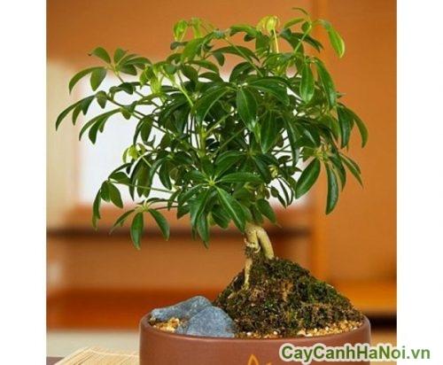 nguoi-menh-hoa-nen-trong-cay-gi-01-332x500 người mệnh hỏa nên trồng cây gì
