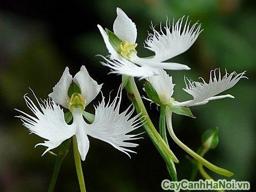 nguoi-menh-kim-nen-trong-cay-gi-01-500x375 người mệnh kim nên trồng cây gì