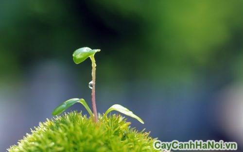 nguoi-menh-thuy-nen-trong-cay-gi-03-500x313 người mệnh thủy nên trồng cây gì