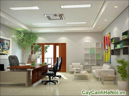 phong-thuy-cay-canh-văn-phong-03-500x341 Phong thủy cây cảnh Văn phòng