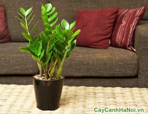 phong-thuy-trong-cay-xanh-03-327x500 Phong thủy trong cây xanh