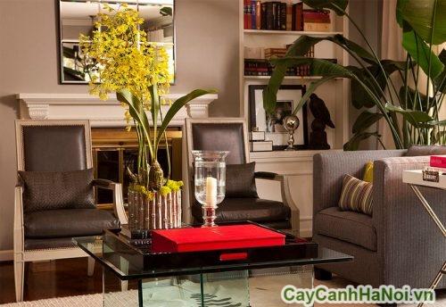 trang-tri-cay-xanh-the-nao-01-376x500 Trang trí cây xanh thế nào trong phòng khách