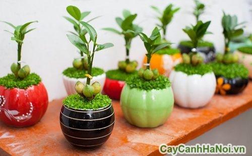 trong-cay-theo-phong-thuy-01-500x309 Trồng cây theo phong thủy nguyên tắc trồng cây