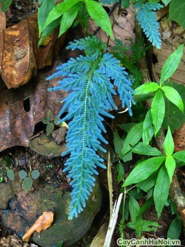 vuon-thang-dung-va-cac-loai-cay-phu-hop-03-375x500 Vườn thẳng đứng và các loài cây phù hợp