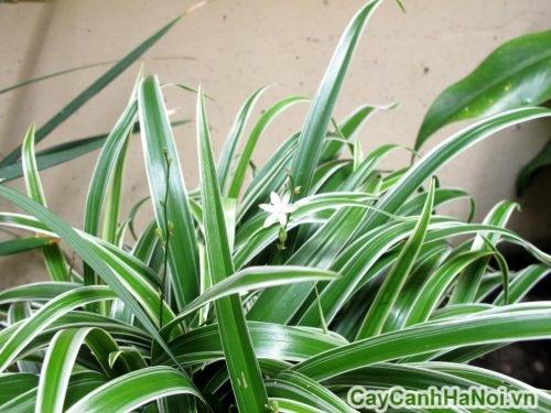 cay-co-01-500x375 Cây cỏ làm cảnh đẹp