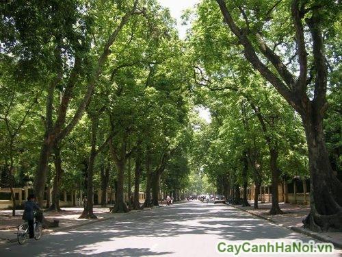 cay-cong-trinh-01-500x375 Cây công trình phổ biến tại Việt Nam