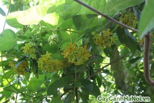 cay-hoa-canh-02-500x333 Cây hoa cảnh nở rộ quanh năm