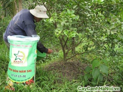 cay-nghe-thuat-500x375 Cây nghệ thuật - trồng sao cho cây xanh tốt?