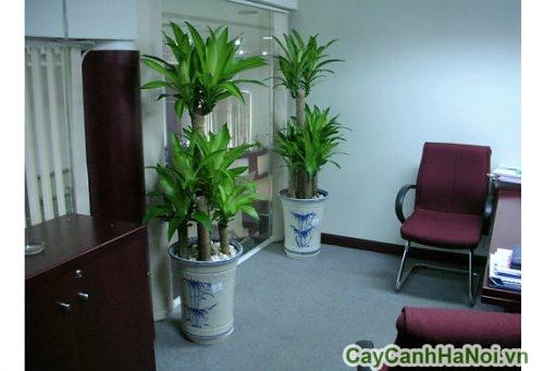 cay-noi-that-trong-nha-02-500x341 Cây nội thất trong nhà