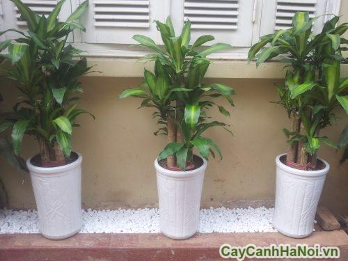 cay-phong-thuy-01-500x375 Cây phong thủy nên trồng trong nhà