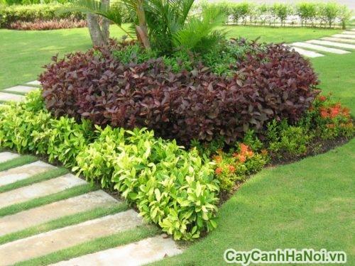 cay-trong-vien-03-500x375 Cây trồng viền là gì?