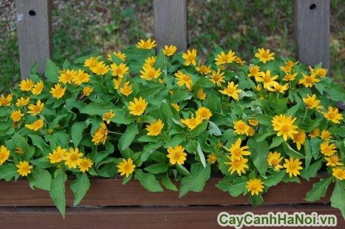 cay-trong-vien-04-500x375 Cây trồng viền đẹp cho sân vườn