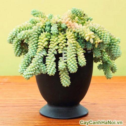 cay-xanh-trong-trong-nha-01-500x500 Cây xanh trồng trong nhà