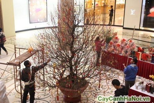 cho-thue-cay-canh-03-500x333 cho thuê cây cảnh