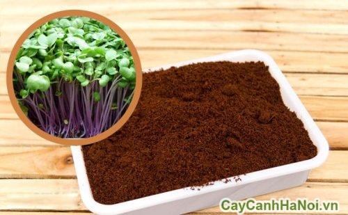 dat-trong-cay-01 đất trồng cây phù hợp với nhóm cây