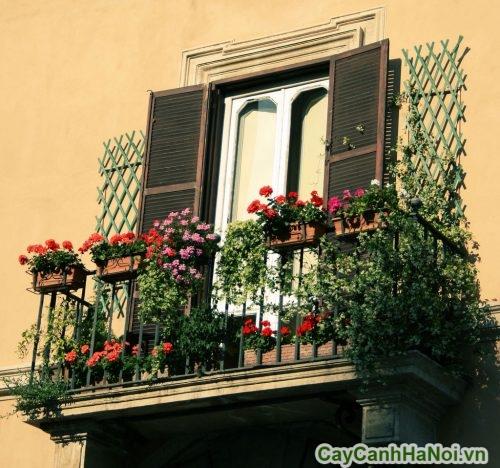 hoa-ban-cong-01-500x468 Hoa ban công đẹp cho ngôi nhà thêm xinh