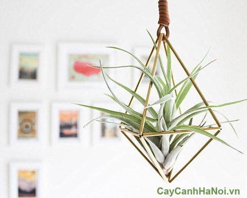 nhung-cay-trong-trong-nha-01-500x500 Những cây trồng trong nhà