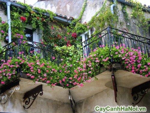 trang-tri-cay-xanh-trong-nha-01-500x335 Trang trí cây xanh trong nhà